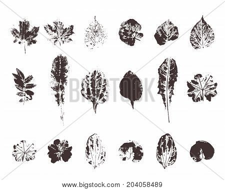 Set with hand made ink stamp leaves. Objects isolated on white. Black and white leaf blots. Monochrome artistic floral collection. Hi detailed texture of forest leaves