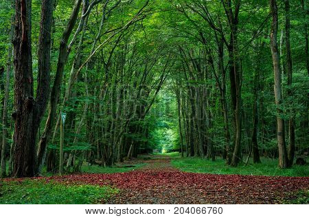 Enchanted trees in forest in the evening. Old Tree. Beautiful landscape with trees green leaves. Nature background.