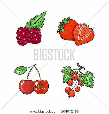 Collection set of hand drawn fruits isolated on white background. Vector illustration of currants strawberries cherries and raspberries in vintage sketch style - stock vector