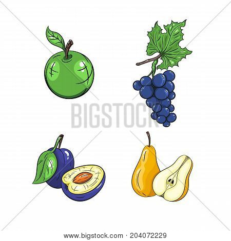 Collection set of hand drawn fruits isolated on white background. Vector illustration of apple grape plum and pear in vintage sketch style - stock vector