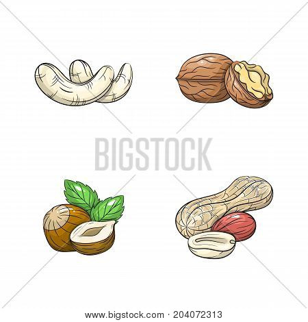 Collection set of hand drawn nuts isolated on white background. Vector illustration of peanut hazelnut cashew and walnut in vintage sketch style - stock vector