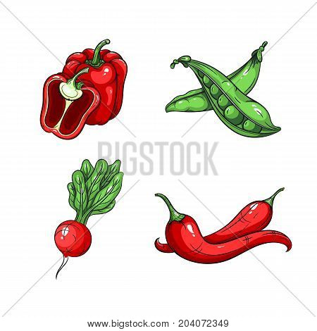 Collection set of hand drawn vegetables isolated on white background. Vector illustration of bell pepper radish chilli pepper and green peas in vintage sketch style - stock vector