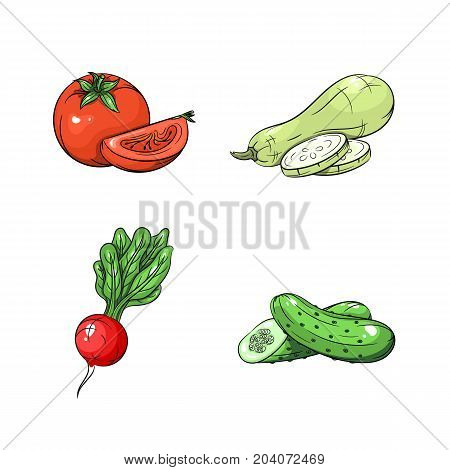 Collection set of hand drawn vegetables isolated on white background. Vector illustration of tomato radish zucchini and cucumber in vintage sketch style - stock vector