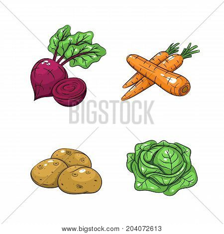 Collection set of hand drawn vegetables isolated on white background. Vector illustration of carrots potatoes cabbage and beetroot in vintage sketch style - stock vector