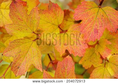 Red and yellow autumn leaves in park