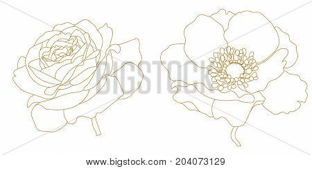Set of golden graphical flowers, anemone, poppy, rose. Vector.