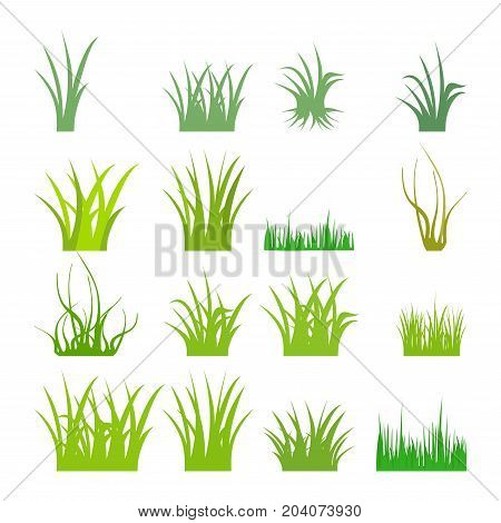 Fragment of a green grass. Vector illustration, isolated on a white