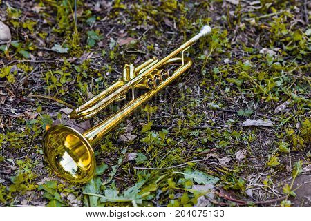 Golden Trumpet Placed On The Grass After The Concert