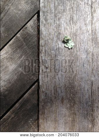 Small lichen piece on wooden table planks