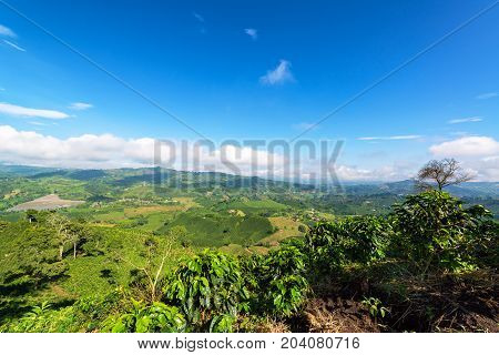 Landscape of coffee farms with a beautiful blue sky near Manizales Colombia