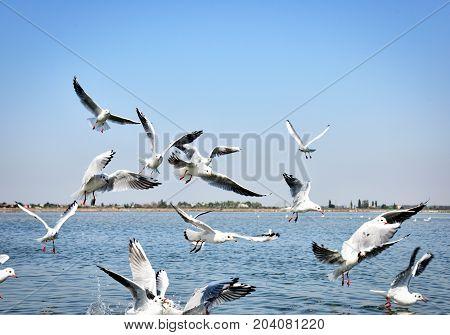 flock of white sea gulls summer day
