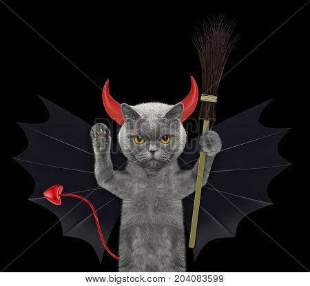 cute halloween cat in bat devil costume with broom - isolated on black background