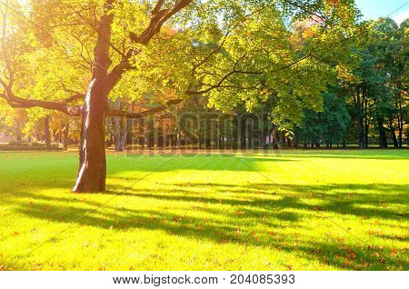Autumn landscape. Sunny autumn trees in the park lit by sunshine. Sunny autumn landscape of autumn park with golden autumn trees. Autumn landscape scene of autumn park nature