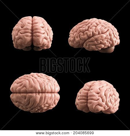 Artificial Human Brain Model, 3D Rendering, Black Background
