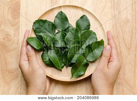 Kaffir Lime leaf on wooden plate and holding by hand,Thai food ingredients,flavoring leaf,spice and herb