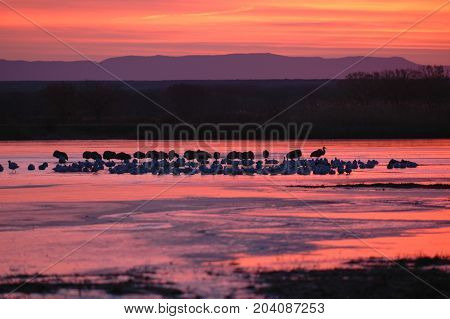 An early sunrise at Bosque Del apache National Wildlife Refuge in southern New Mexico.