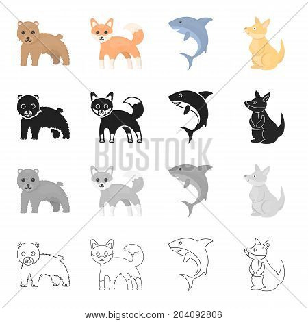 Wild animal bear, ravenous shark, kangaroo, sly fox. Animals set collection icons in cartoon black monochrome outline style vector symbol stock illustration .
