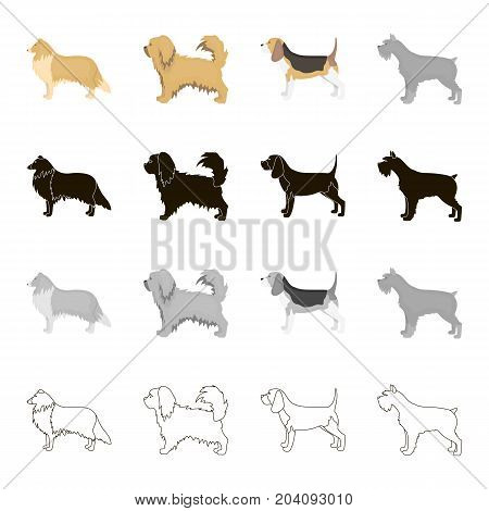 Pointer, dog collie, scottish shepherd, riesen, schnauzer, breed pekingese.Dog breeds set collection icons in cartoon black monochrome outline style vector symbol stock illustration .