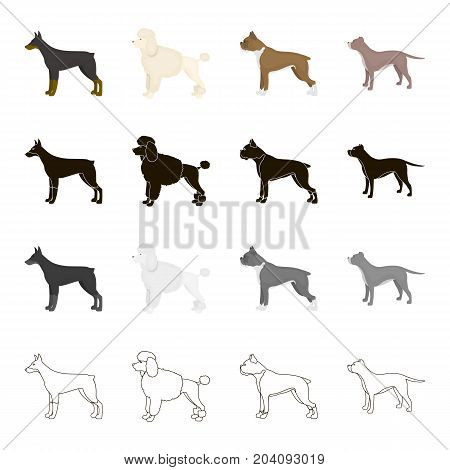 Doberman, dog poodle, boxer, breed pit bull. Dog breeds set collection icons in cartoon black monochrome outline style vector symbol stock illustration .