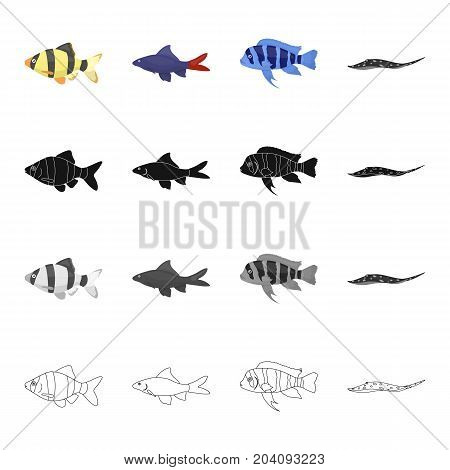 Different types of aquarium and sea fish, barbeque, stingray. A fish set collection icons in cartoon black monochrome outline style vector symbol stock illustration .