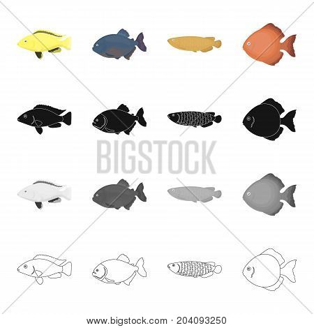 Different types of aquarium and sea fish, the moon. A fish set collection icons in cartoon black monochrome outline style vector symbol stock illustration .