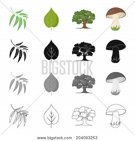 Branch with leaves, leaf, tree in the forest, mushroom. Forest set collection icons in cartoon black monochrome outline style vector symbol stock illustration .
