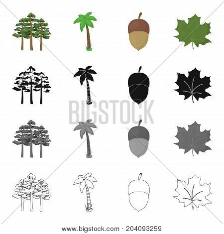 A group of trees in the forest, a palm tree, an acorn, a maple leaf. Forest set collection icons in cartoon black monochrome outline style vector symbol stock illustration .