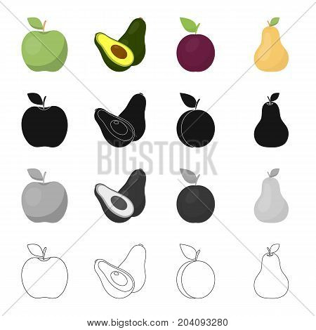 Green apple, ripe avocado, plum fruit, pear. Fruits set collection icons in cartoon black monochrome outline style vector symbol stock illustration .