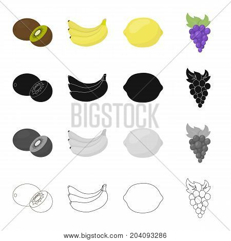 Kiwi fruit, ripe banana, sour lemon, a bunch of grapes. Fruits set collection icons in cartoon black monochrome outline style vector symbol stock illustration .