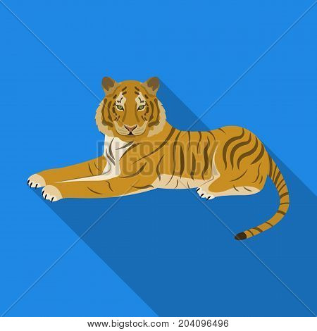 Tiger, a predatory animal. The Belgian tiger, a large wild cat single icon in flat style vector symbol stock illustration .