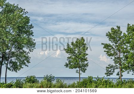 Four trees standing on the edge of Lake Michigan with interesting clouds