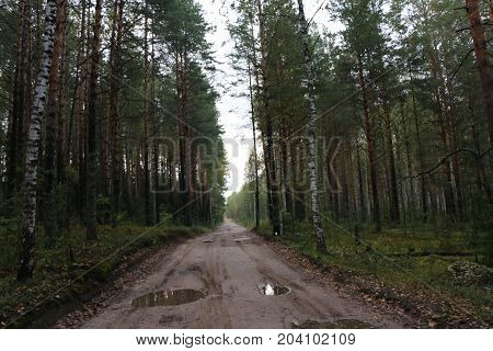 Rural Forest Road After The Rain With Mud And Deep Puddles