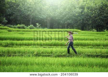 Young farmer walks carrying a hoe exploring his green field.