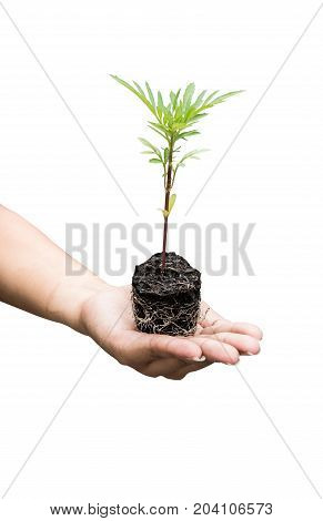 plant the tree isolated on white path and cut out