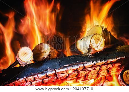 birch wood burning in the fireplace or bonfire. Background