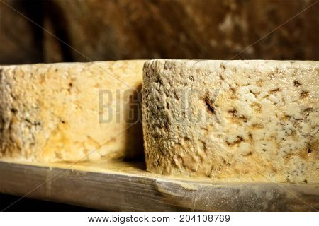 A photo of Cabrales, traditional Spanish artisan cheese, developing penicillium molds in the process of aging on the so-called talamera in a cave, in the Picos de Europa mountains in Asturias, Spain