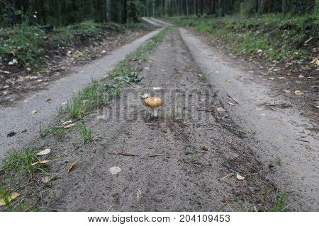 Mushroom On The Road Crushed With A Foot In A Black Sneaker