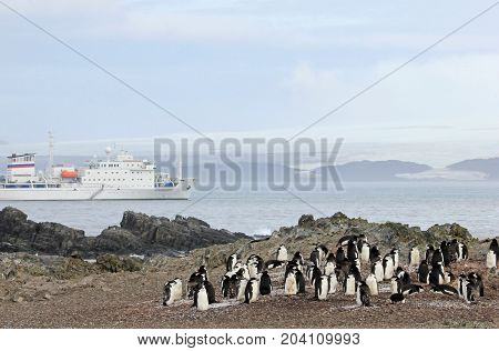 Wild chinstrap penguins and cruise ship in the background, Antarctica Peninsula, Antarctica