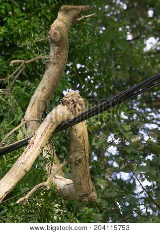 COSHESTON PEMBROKESHIRE UK - 13th SEPTEMBER 2017. Fallen branch causes damage to power lines following storm Aileen