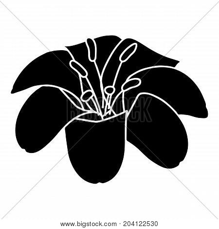 Lily flower icon. Simple illustration of lily flower vector icon for web
