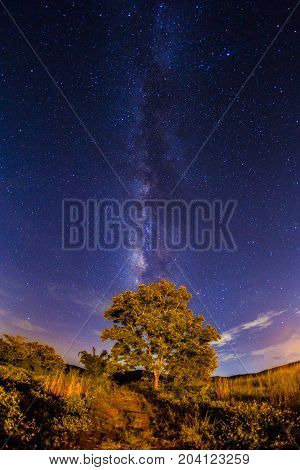 Milky Way Rise Over Tree Long Exposure Noise Most Commonly Manifests Itself As Bright.