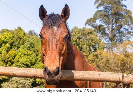 Horses Outdoors Paddocks