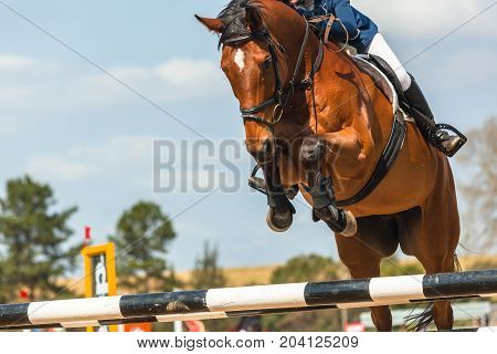 Show Jumping Horse Closeup Action