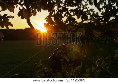 Sunbeams Goes Through Leaves And Tree Trunk On Meadow, Czech Landscape
