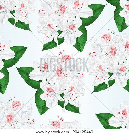 Seamless texture flowers white rhododendron  with  leaves vintage  vector illustration editable hand draw