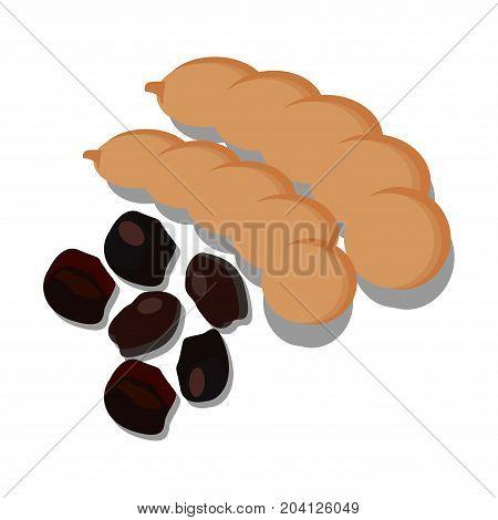 tamarind vector  fruit on white background vector.