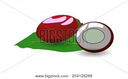Miracle Fruit  fruit on white background vector