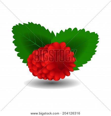 Raspberry. Sweet fruit. 3d vector icons set. Realistic illustration.