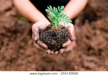 Dirty Farmer hand holding green plant to be planting to ground with dry cracked soil dirt background symbol of ecology conceptpoor farmers conceptselective focus
