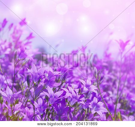Summer bright background with blooming flowers bells
